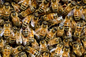 a lot of busy bees