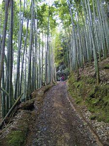 Bamboo forest near Nishiyama, Kyoto