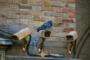 Bird sitting and pooping on security cameras