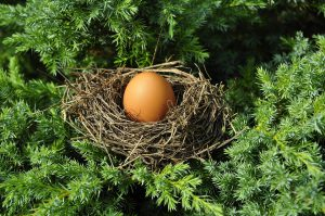 egg in nest, on branches