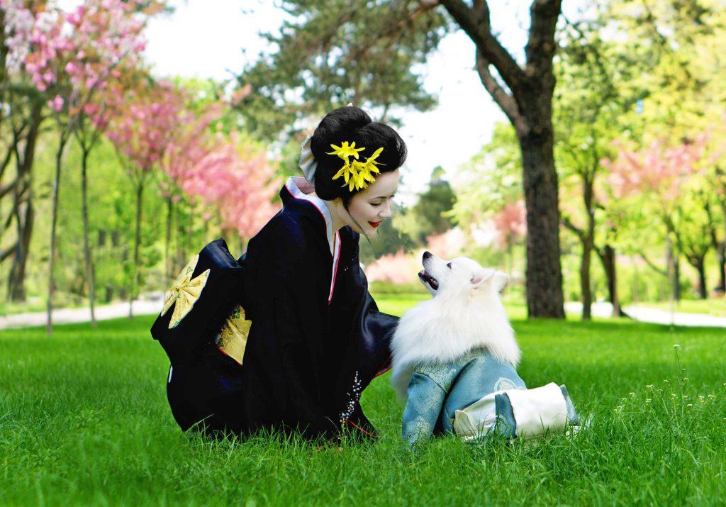Japanese woman cudling white dog dressed up in Japanese Kimono.