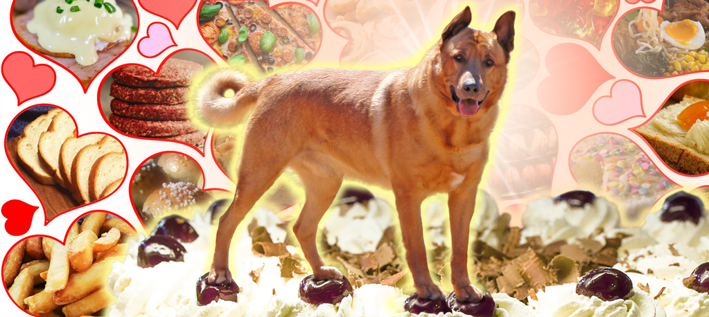 Axel the dog, joyfully standing on a cake, surrounded by food that he loves.