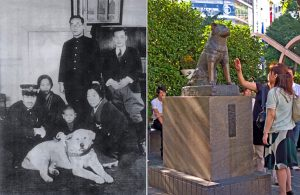 Montage of old photo of Akita dog Hachiko surrounded by close companions, and recent photo of Hachiko's statue surrounded by people at Shibuya Station.