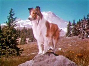 Lassie TV series intro screenshot - Lassie standing on a rock.