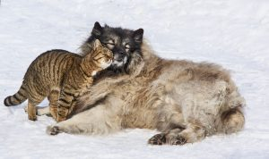 Dog and Cat friends.