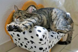 Cat relaxing in sofa-shaped cat bed.